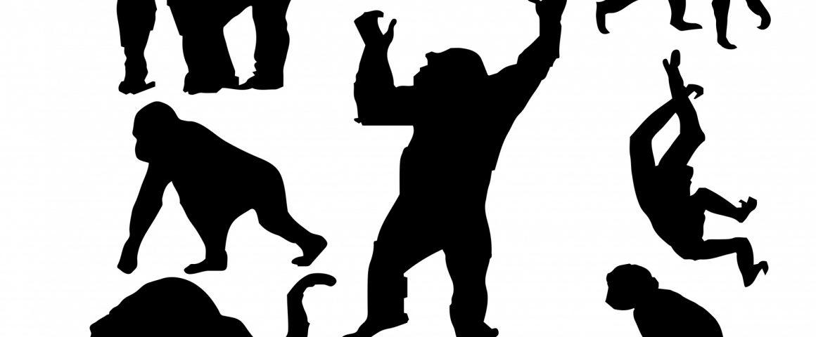 Sieben Affen
