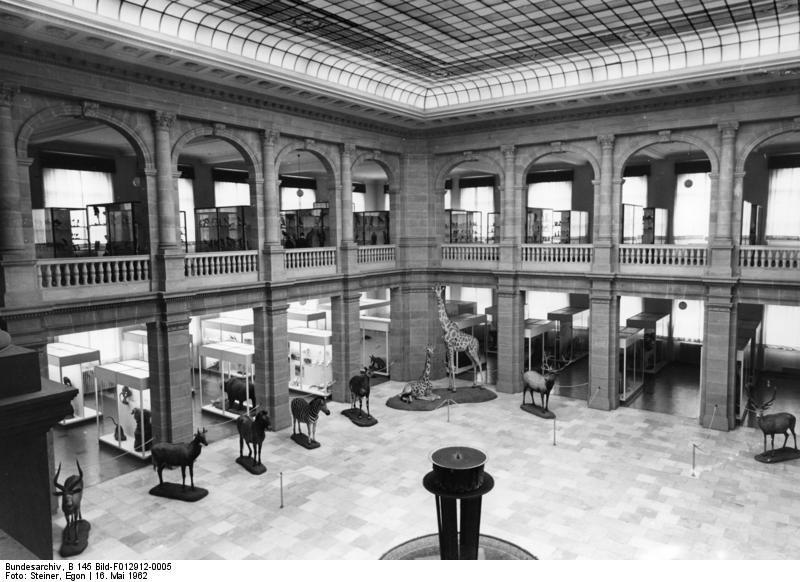 Museum Alexander König, Bonn Blick von der Empore in den Lichthof des Museums König,