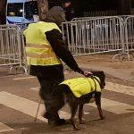 Gelbwestenhund
