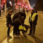 Fotomotiv Gelbwestenhund