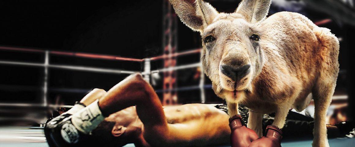 Ungleicher Boxkampf