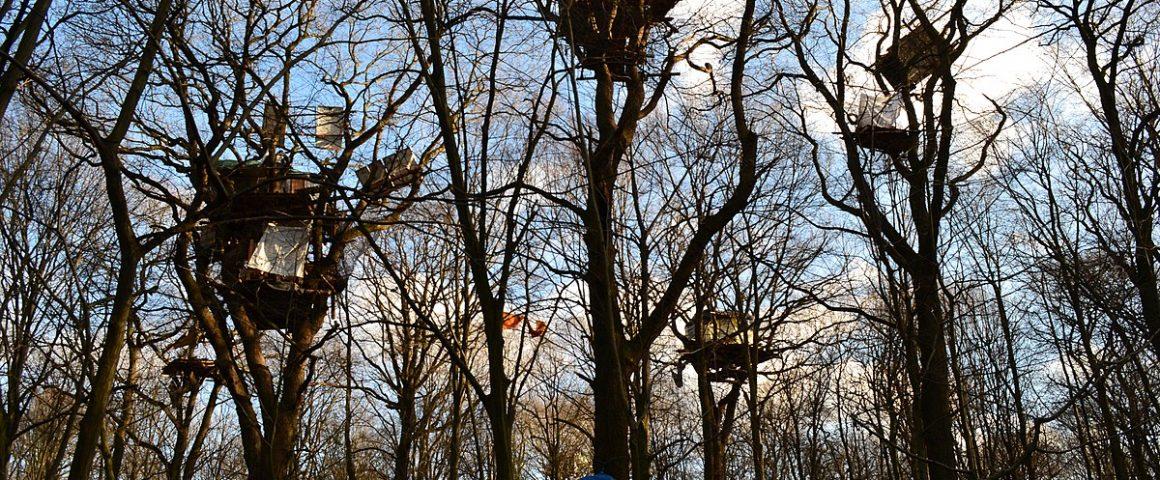 Baumhäuser HAmbacher Forst
