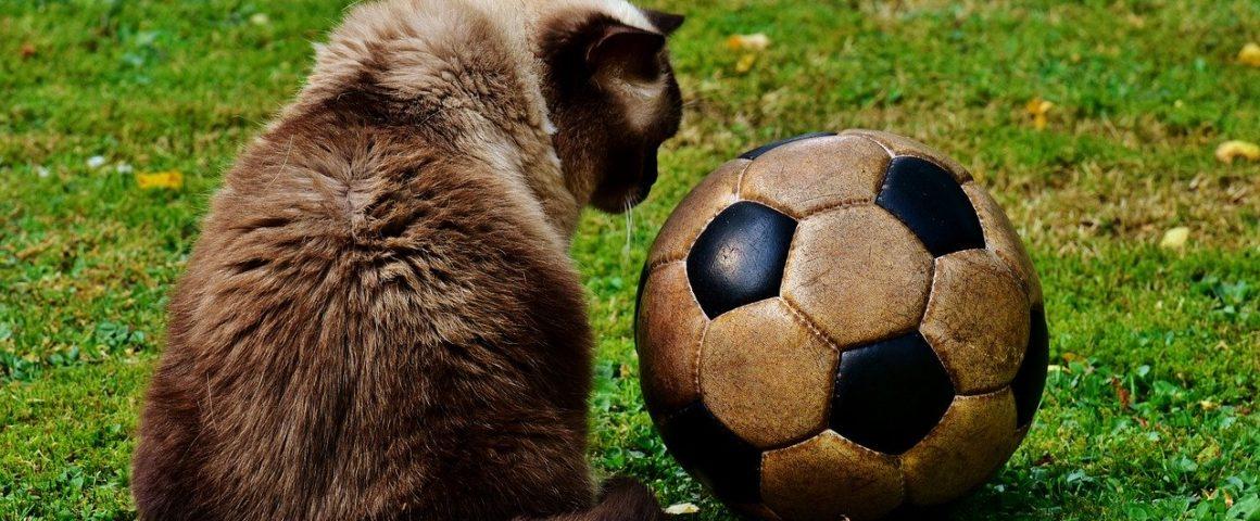 Katze mit Fußball