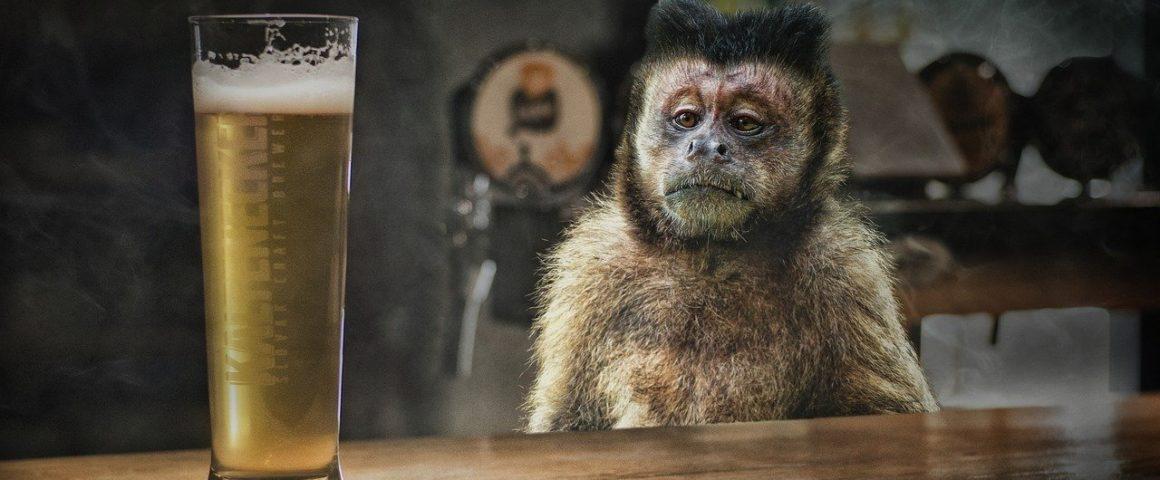 Affe mit Bier