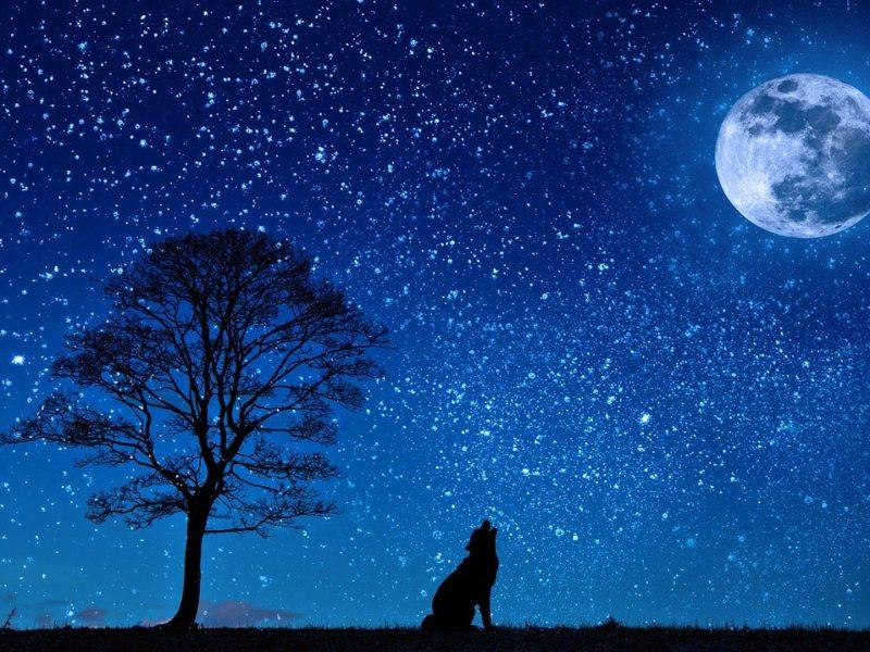 Heulender Hund im Mondschein