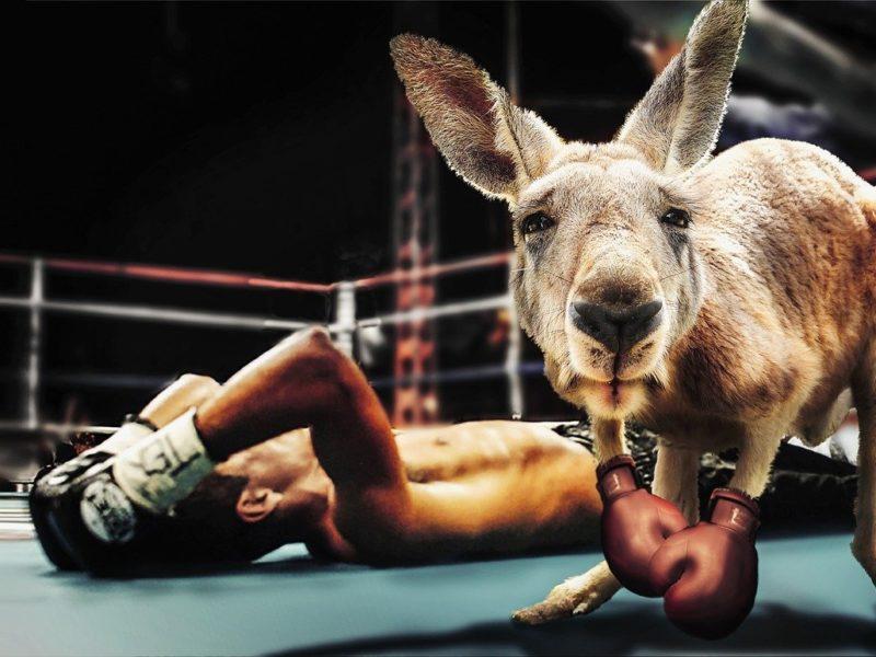 Knock out - Symbolbild